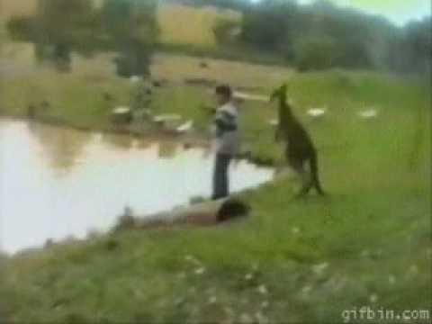 Kengur gurnuo dete u vodu