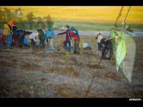 Plantare de toamna pentru Padurea Copiilor / 18 noiembrie 2012, 2012