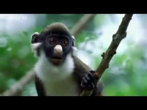 Funny British Animal Voiceovers