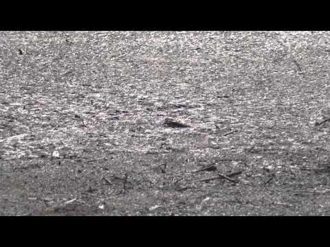 2011-05-22 arnetta e fitodepurazione - kindergarden