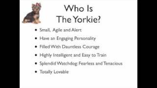 How To Choose A Yorkie Name