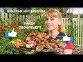Сочный Шашлык из свинины вкусный нежный простой рецепт маринада
