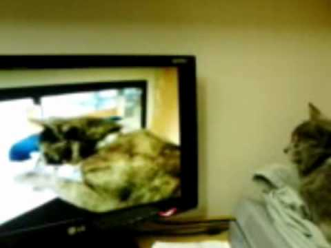 Inception Cat