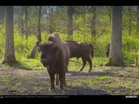 VIDEOCLIP Traseu MTB Targoviste - Zimbraria Neagra Bucsani - Ploiesti