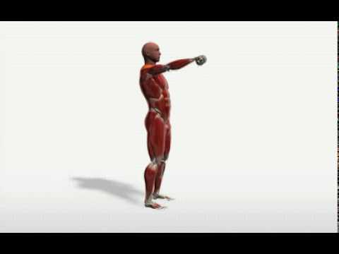 Exercise Videos- Single-arm Dumbbell Shoulder Flexion -- Standing