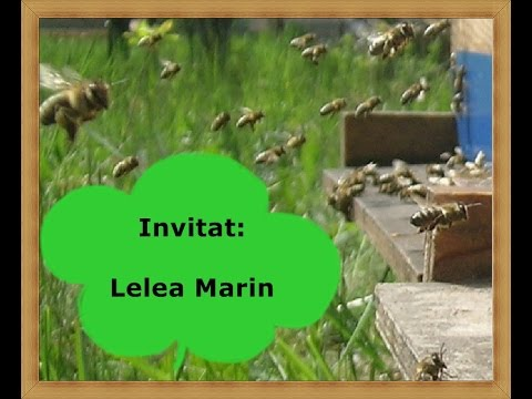 LA START IN APICULTURA - LIVE 7- Intalnire cu Marin Lelea