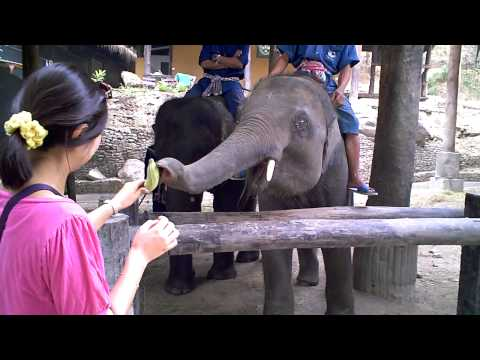 Elephant Camp♪