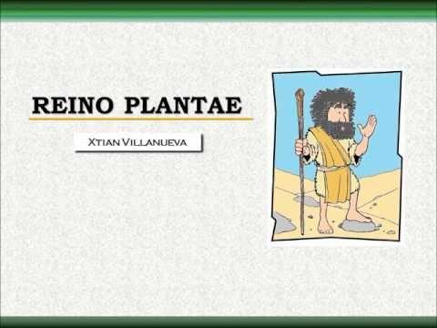 Reino Plantae I: Clasificación