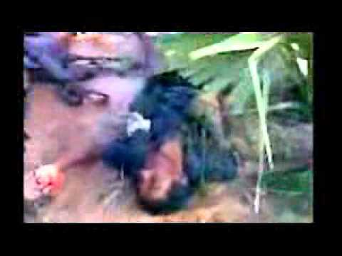 Sri Lanka killing field 3.flv