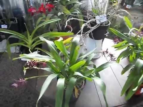 Orquídeas en APCOA III