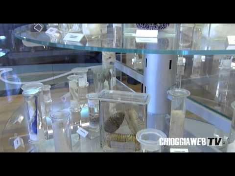 Museo biologia marina Chioggia.mp4