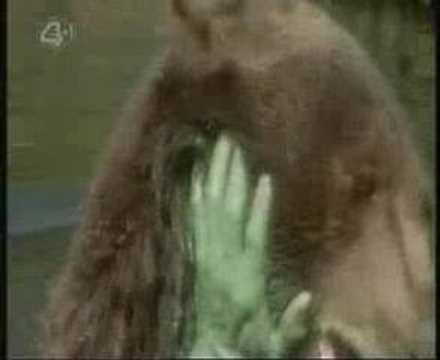 The Incredible Hulk fights a Grizzly Bear
