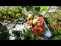 Фрагмент с начала видео Тропический сад. Экзотические растения. Парк Феникс - Ницца.