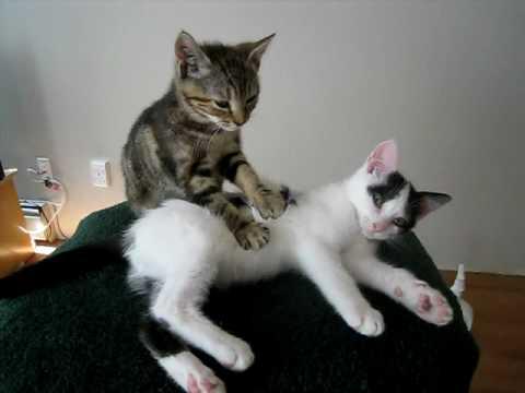 Kätzchen Massage Therapie