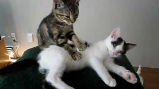 Kitten Massage Therapy