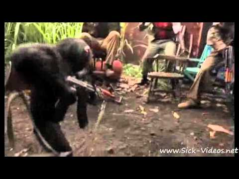 Chimp With AK 47