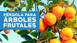 ¿Cómo construir una pérgola y cuidar los árboles frutales?