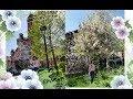 Цветущий весенний Vlog. Прогулка по городу Асти. В ИТалии весна!