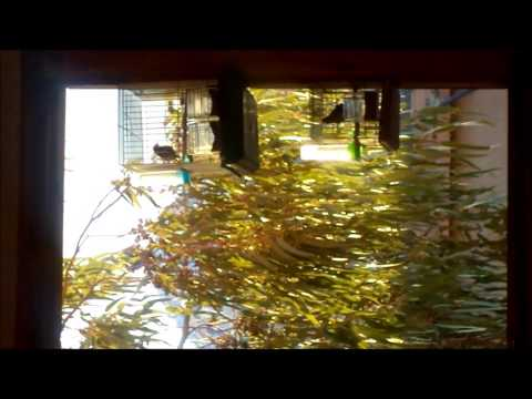TRES BELLE FILLE