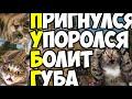 Фрагмент с начала видео Приколы в PUBG #2 | WDF 99 | Как тащить в ПАБГ?