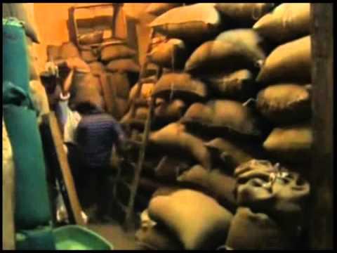 Cocaine Mummies of Ancient Egypt