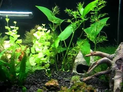 40 Gallon Planted Aquarium - fishless nitrogen cycling