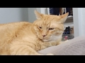 Meet The Cats Of Ginger Kitties Four