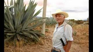 Agua Miel y Pulque en San Juan Guelavía