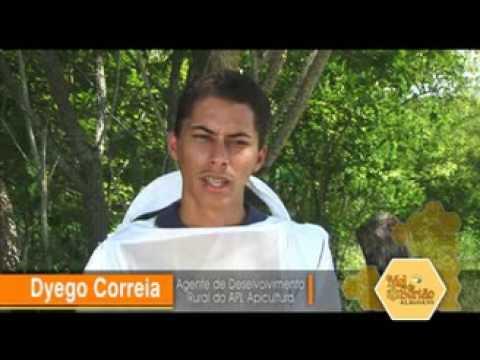 Apicultura Passo a Passo - Sebrae Alagoas