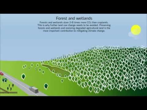 Life Cycle Carbon Footprint of Nitrogen Fertilizers