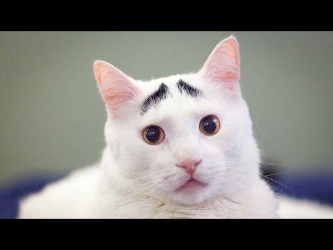Raising Eyebrows: Cute Cat Becomes Viral Sensation