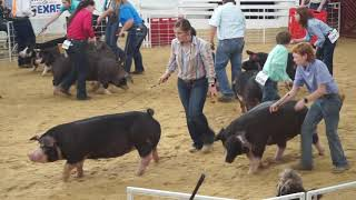 State Fair of Texas Swine Judging for Youth Livestock Auction