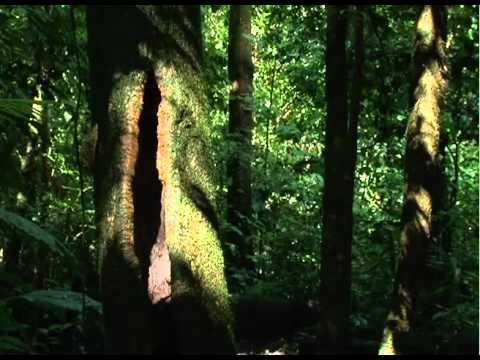Instituto de Investigacion en Servicios Forestales - UNA