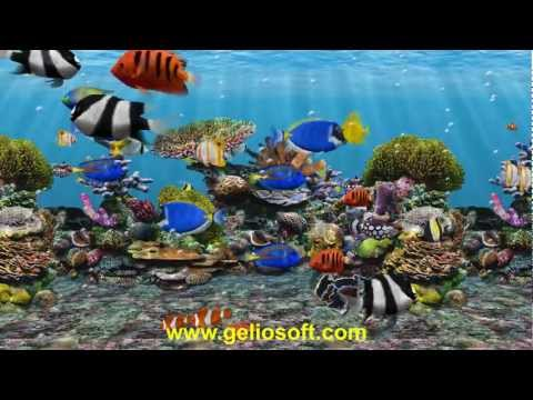 3D Fish School Aquarium Screensaver - Geliosoft