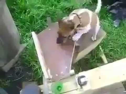 فيديو: هذا ما يحدث عندما يمتلك مهندس كلب يحب اللعب !