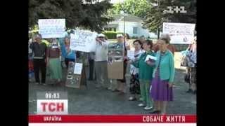 Бердичев протестует против убийства собак