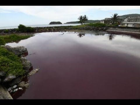 St Mary river turns blood red