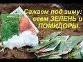 Сажаем под зиму: сеем зелень и помидоры.  Winter Sowing: salad, dill, tomatoes.