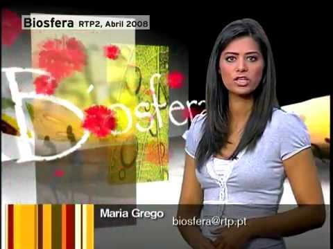 Tragédia da Madeira: Um desastre anunciado em 2008 por Biosfera 1/2