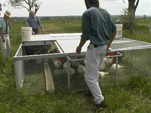 Organic Farming - Pastured Poultry, How to
