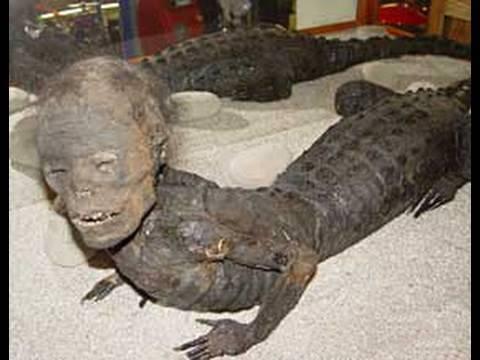 Hybrid Human Alligator