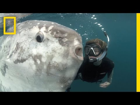 Strange Sunfish and Hope for the Ocean