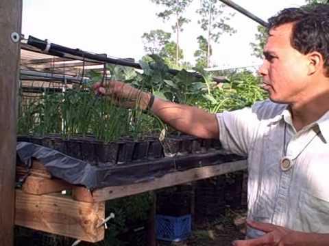 DIY Homemade Hydroponic Vertical Garden and Urban Farm in South Florida
