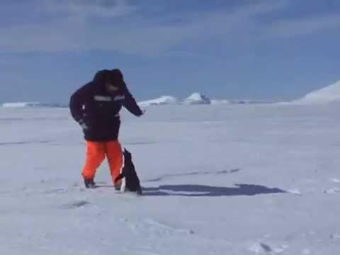 """Pingvin ga umalo uhvatio za """"onu"""" stvar"""