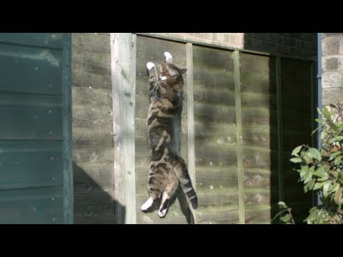 Gravity Defying Cat - The Slow Mo Guys