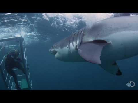 18-Foot Shark Attacks Cage | Great White Serial Killer - Shark Week 2013