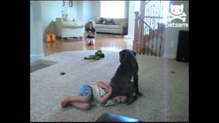 Dog Sits on Little Kid's Head