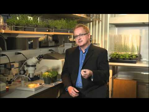 UCSD 50: Moores Ctr; Plant Biology; Brain Cognition; Chuao