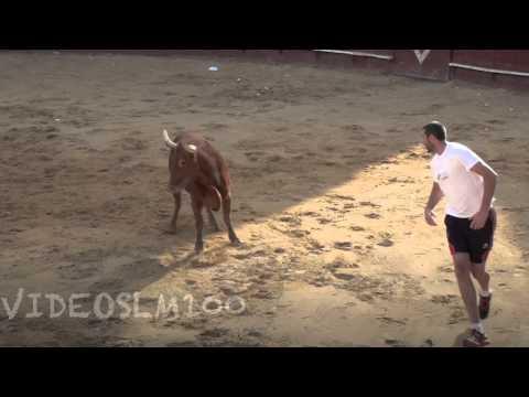 Arguedas vacas plaza y calle 11 agosto 2012