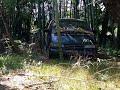 Фрагмент с начала видео - Находка в лесу